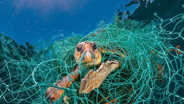 plastic-waste-single-use-worldwide-consumption-animals-2.adapt.1190.1