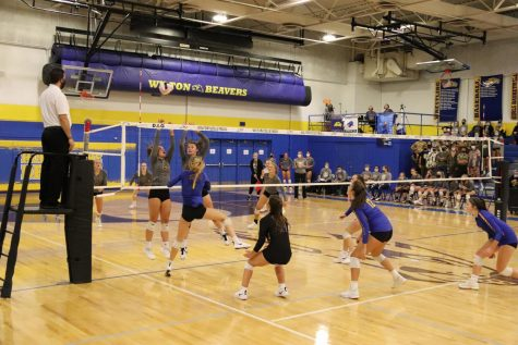 Beavers Volleyball Remains Strong