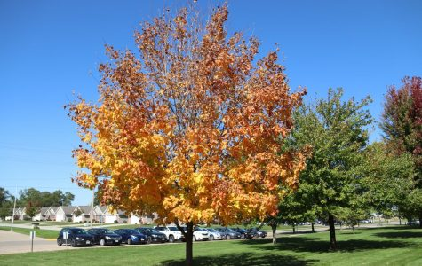 Fall Festivities to Indulge in Amidst Restrictions