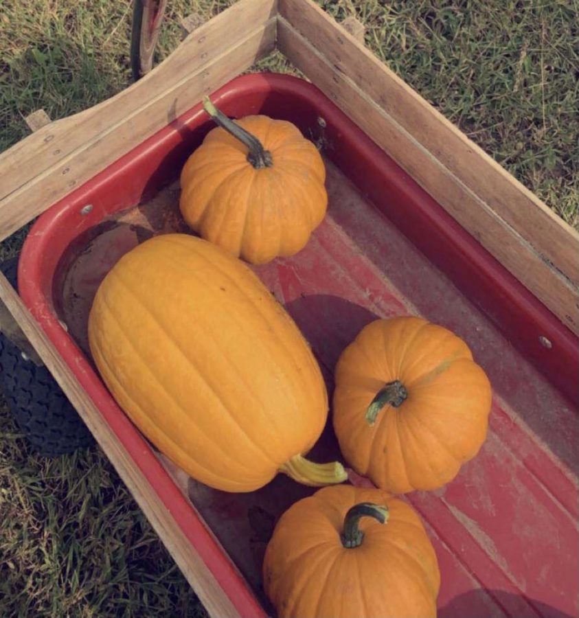 Why+Do+People+Carve+Pumpkins%3F
